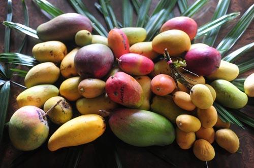 mango varieties from Mango Mania Festival