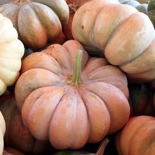 Fairytale Pumpkins in a big pile