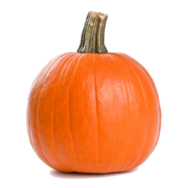 Sugar Pumpkin with blank background